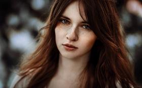 Картинка девушка, лицо, фото, волосы, шатенка