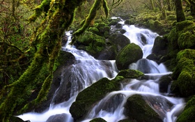 Обои зелень, лес, ручей, камни, течение, мох, Швейцария
