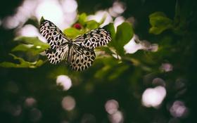 Обои бабочка, крылышки, боке