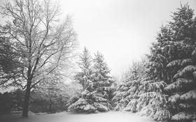 Обои зима, снег, деревья, елки