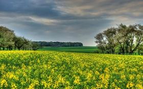 Обои поле, деревья, Германия, рапс, Hessen