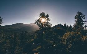 Картинка солнце, деревья, горы