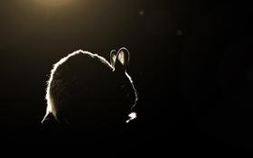 Картинка свет, тень, кролик