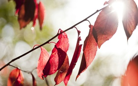 Обои листья, свет, природа