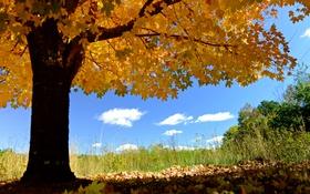 Обои осень, небо, листья, дерево