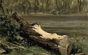 Обои пейзаж, природа, картина, Карлос де Хаэс, Штудия Ствола Дерева
