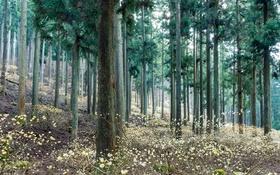 Обои зелень, лес, деревья, природа