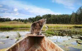 Обои лодка, природа, взгляд, кошка