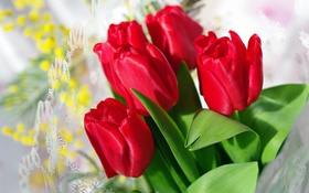 Обои красный, тюльпаны, бутоны