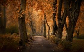Обои осень, парк, Аллея
