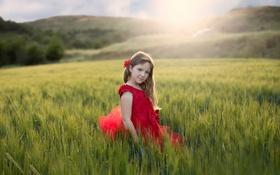 Обои поле, лето, девочка