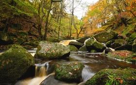 Обои лес, вода, деревья, река, камни