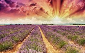 Обои поле, небо, облака, зарево, лучи солнца, лаванда