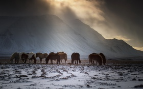 Обои зима, кони, утро