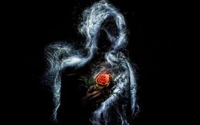 Обои силуэт, фон, роза