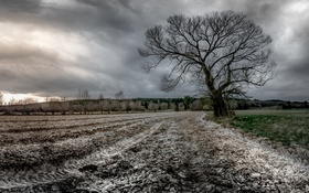 Обои поле, природа, дерево