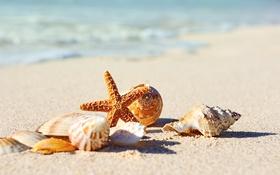 Обои песок, море, пляж, берег, ракушки, summer, beach