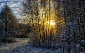 Обои зима, лес, солнце, снег, пейзаж