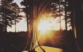 Обои лес, солнце, деревья, палатка