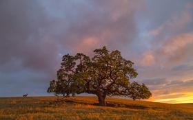 Обои поле, осень, трава, закат, дерево, вечер