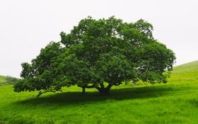 Обои зелень, лето, природа, Дерево