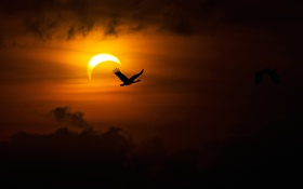 Обои птица, Луна, силуэт, зарево