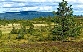 Обои лес, облака, деревья, поляна, Норвегия, Hamar