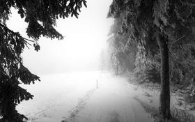 Картинка дорога, лес, снег, туман