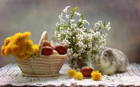 Картинка вишня, яйца, морская свинка, одуванчики, крашенки