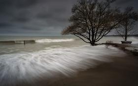 Обои море, дерево, берег
