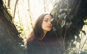 Картинка девушка, дерево, шатенка