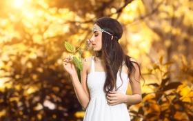 Картинка цветок, лето, девушка