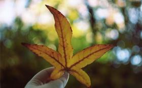 Картинка оранжевый, желтый, лист, боке