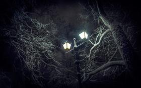 Обои снег, деревья, фонарь