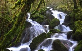 Обои лес, вода, река, камни, мох, поток