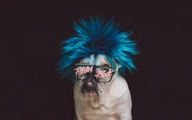 Обои взгляд, друг, панк, собака