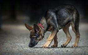 Обои фон, улица, собака