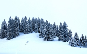 Картинка зима, снег, деревья, ели, холм