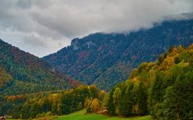 Обои поле, осень, лес, трава, облака, деревья, горы