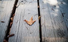 Картинка осень, листок, сухой