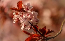 Обои цветы, дерево, ветка, весна, цветение