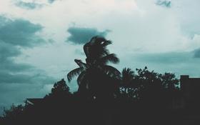 Картинка небо, облака, деревья, пальма, силуэты