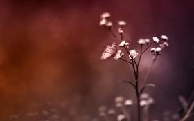 Обои туман, цвета, Цветок, бабочка