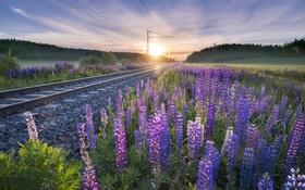 Обои цветы, утро, железная дорога
