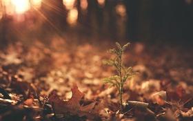 Обои лес, свет, дерево
