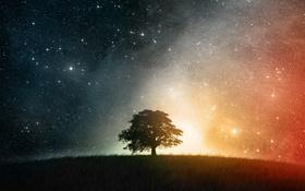 Картинка небо, трава, звезды, ночь, дерево