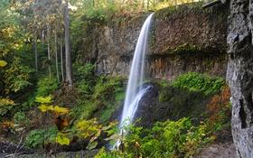 Обои осень, лес, скала, парк, водопад, США, Silver Falls State Park
