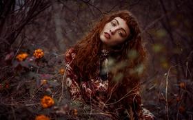 Картинка взгляд, девушка, природа, лицо, фон, волосы, шатенка