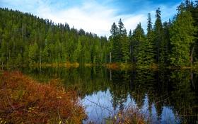 Обои осень, лес, вода, деревья, озеро, отражение, США