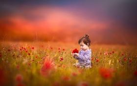 Обои поле, цветы, девочка